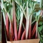 Summertime is Rhubarb Time!