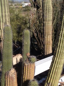 Castles and Cactus - Tovrea Castle and Carraro Cactus Gardens