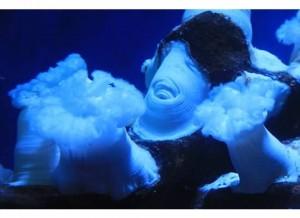 Sea Life Up Close & Personal!