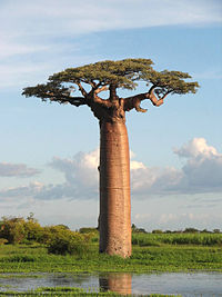 Earth Day: Tree of Life